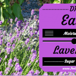 Easy DIY Lavender Sugar Scrub Recipe